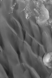 The steepest slopes on each dune face toward the bottom/lower left of the image. This indicates that the dominant winds came from the north (top of the image). This picture covers an area 3 km (1.9 mi) wide and is lit by sunlight from the lower left. (NASA/JPL-Caltech/Malin Space Science Systems)